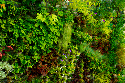 Outdoor Green Wall Vancouver, Private Patio Living Wall, Native Plant  Vertical Garden